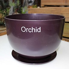 orchid-보라